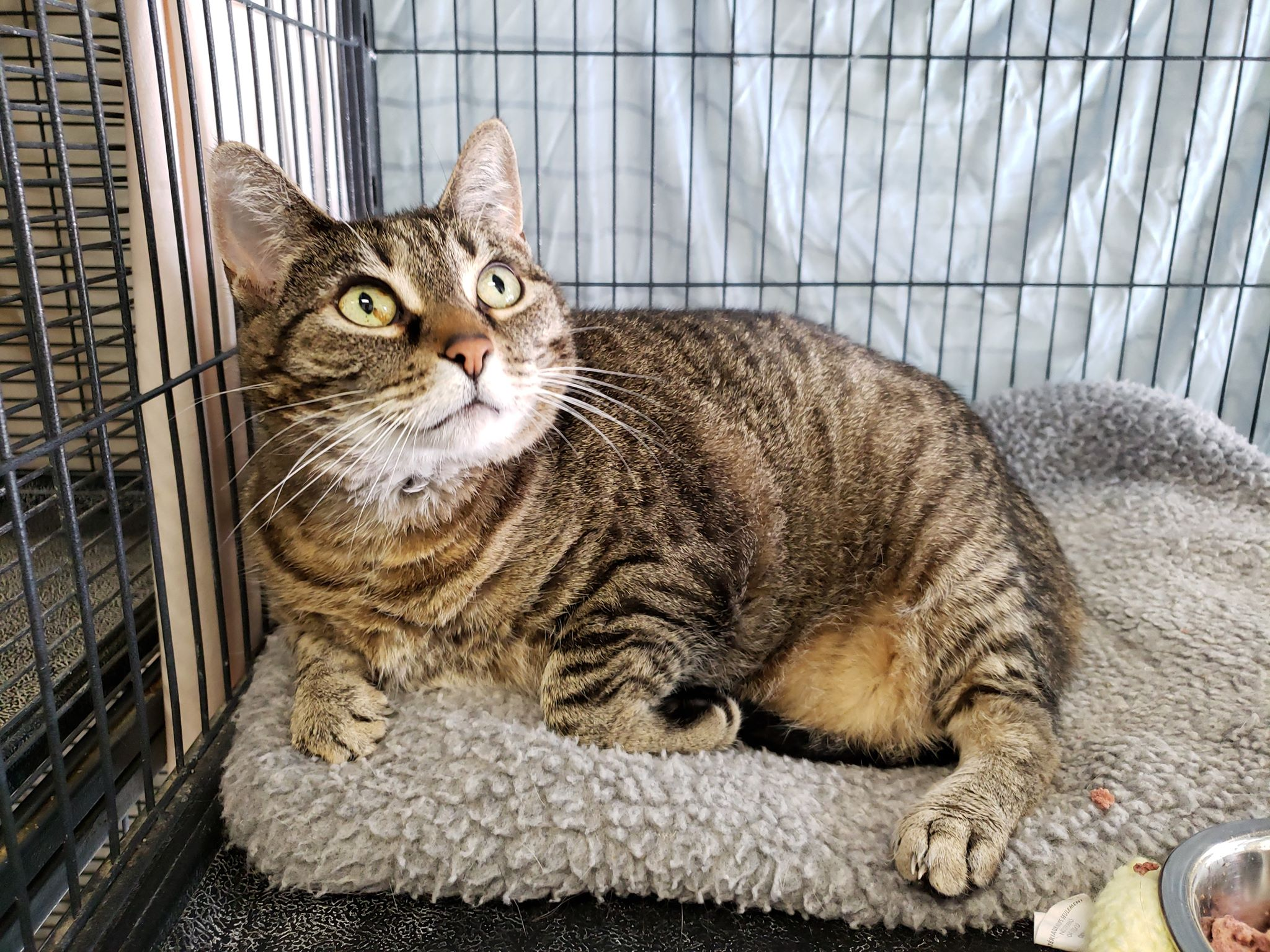 Beautiful Bella is extremely affectionate