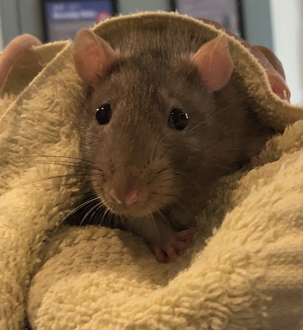 Mouse is very curious and loves his treats!