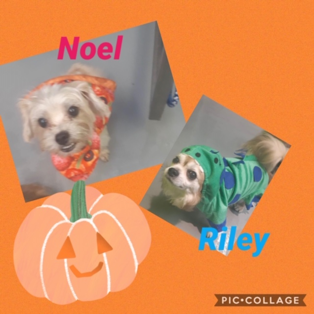 UPDATE: ADOPTED! Cuties Riley & Noel!