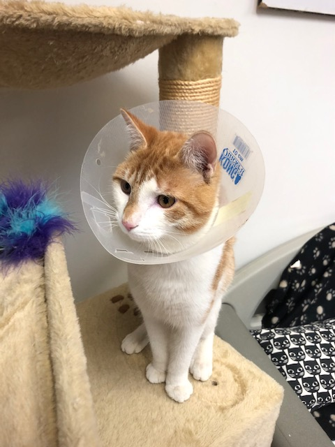 One-year-old Ethan is the purr-fect fit!