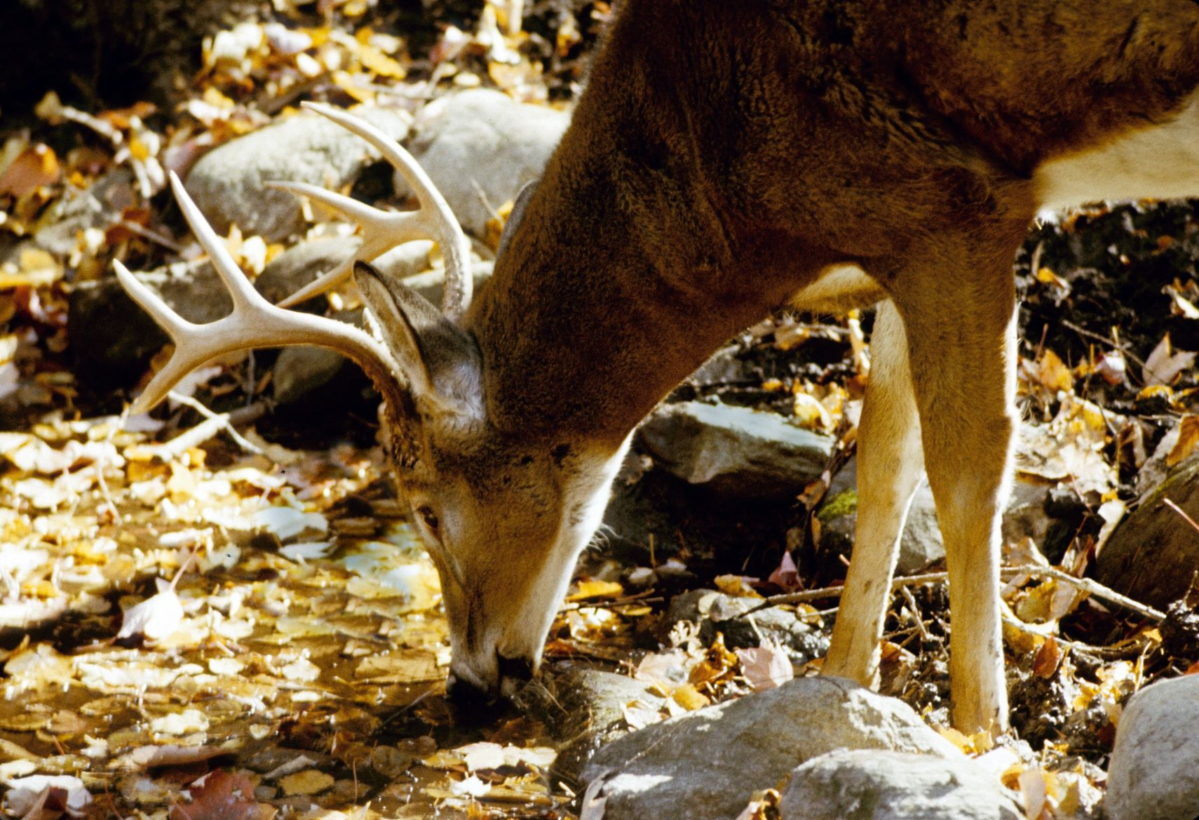 The autumn hunt -- both a tradition and a controversy