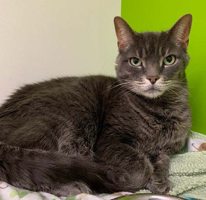 Give Grey a home this winter!