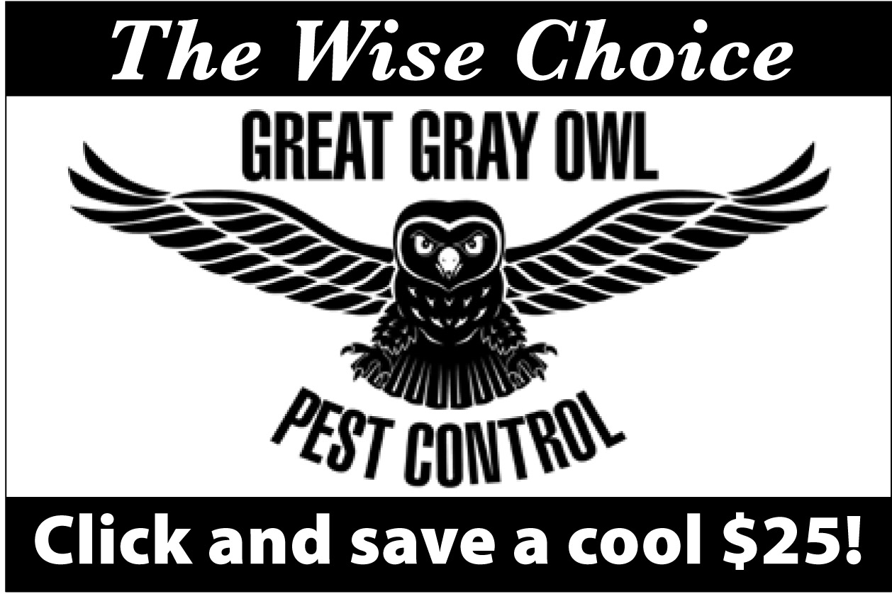 2016 Summer Great Gray Owl PC
