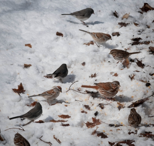 Sparrows mark start new season in Lake Simcoe area