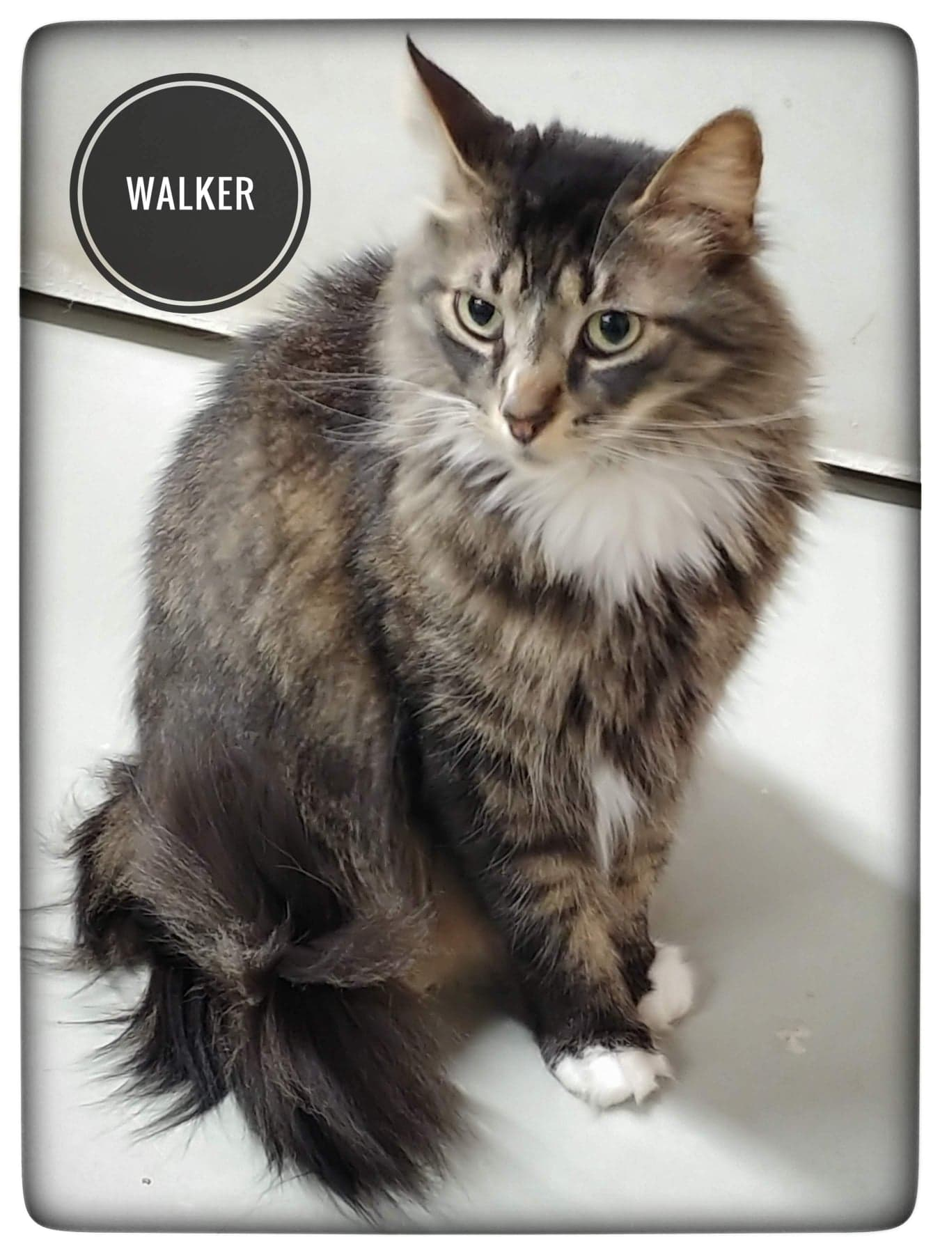 Let's find Walker a home!