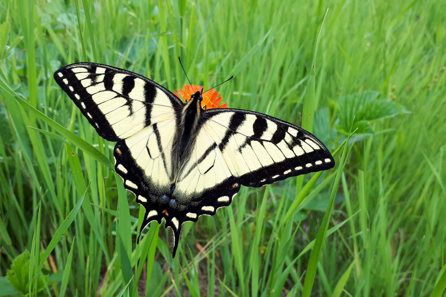 Tips for watching the elusive butterfly
