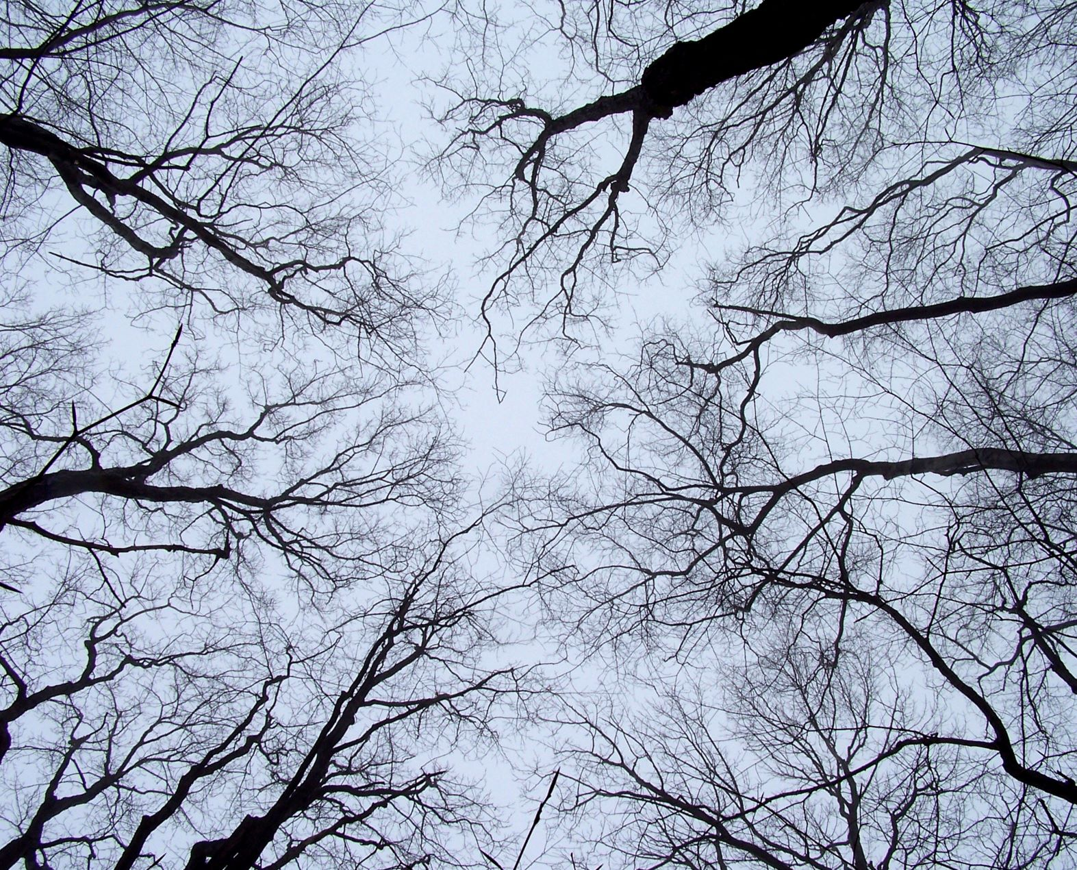 How deciduous trees survive the winter