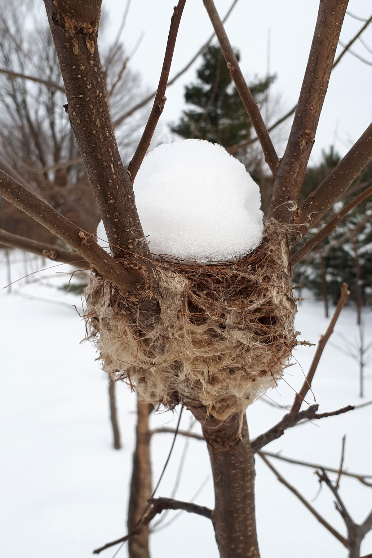 Winter reveals some of Nature's secrets