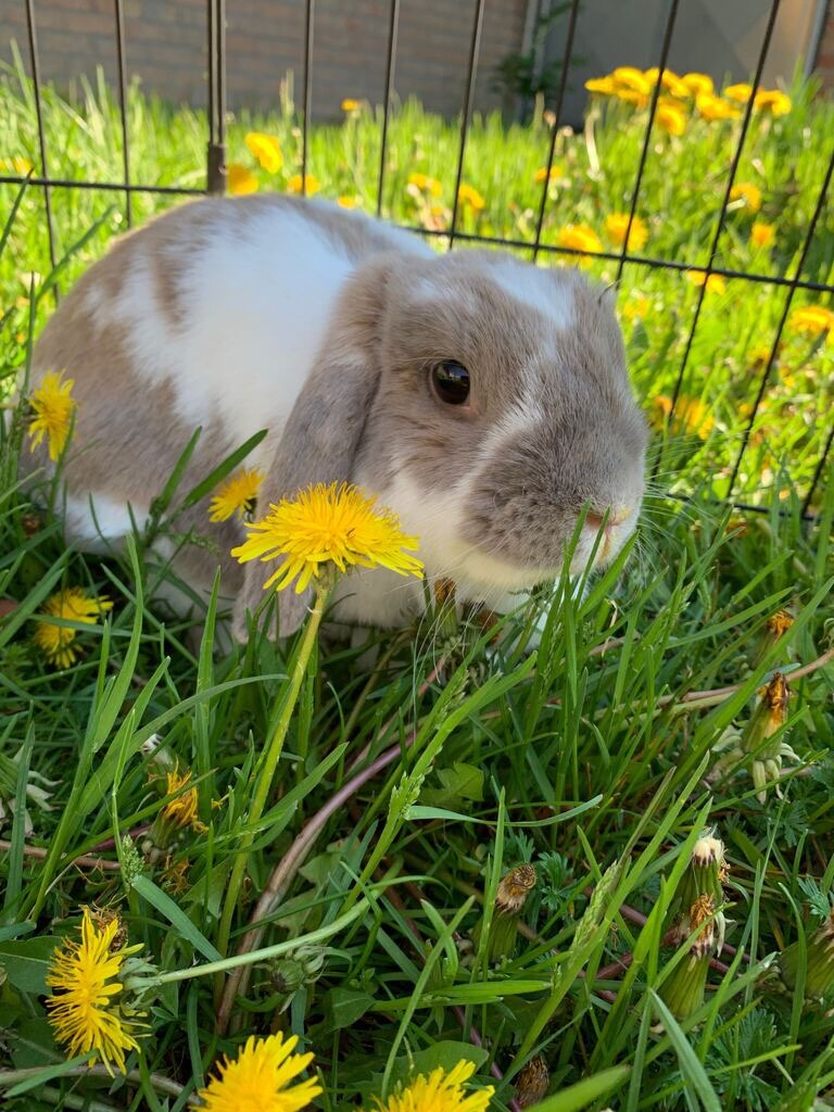 Mary is a smart bunny who needs a rabbit-friendly home
