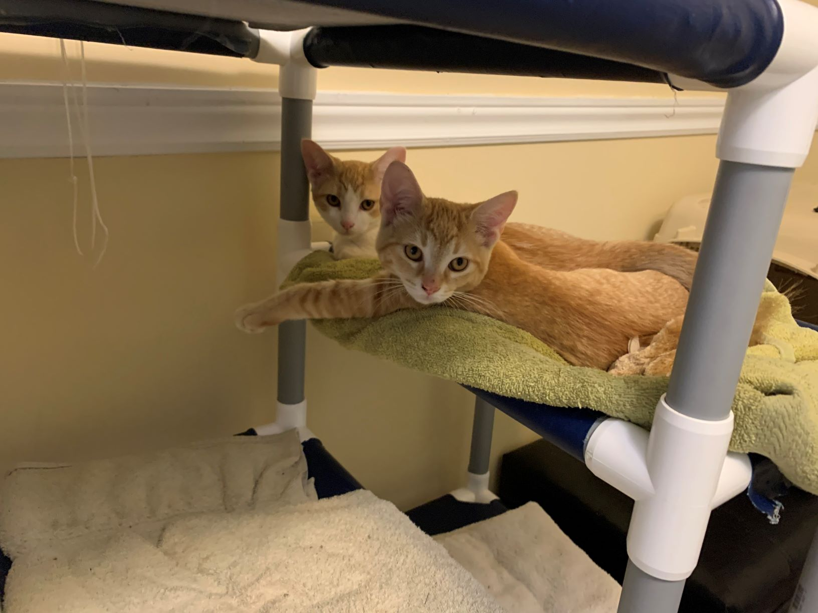 A special home needed for spooked kittens!