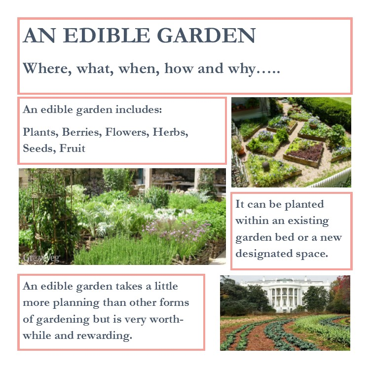 How to create an edible garden