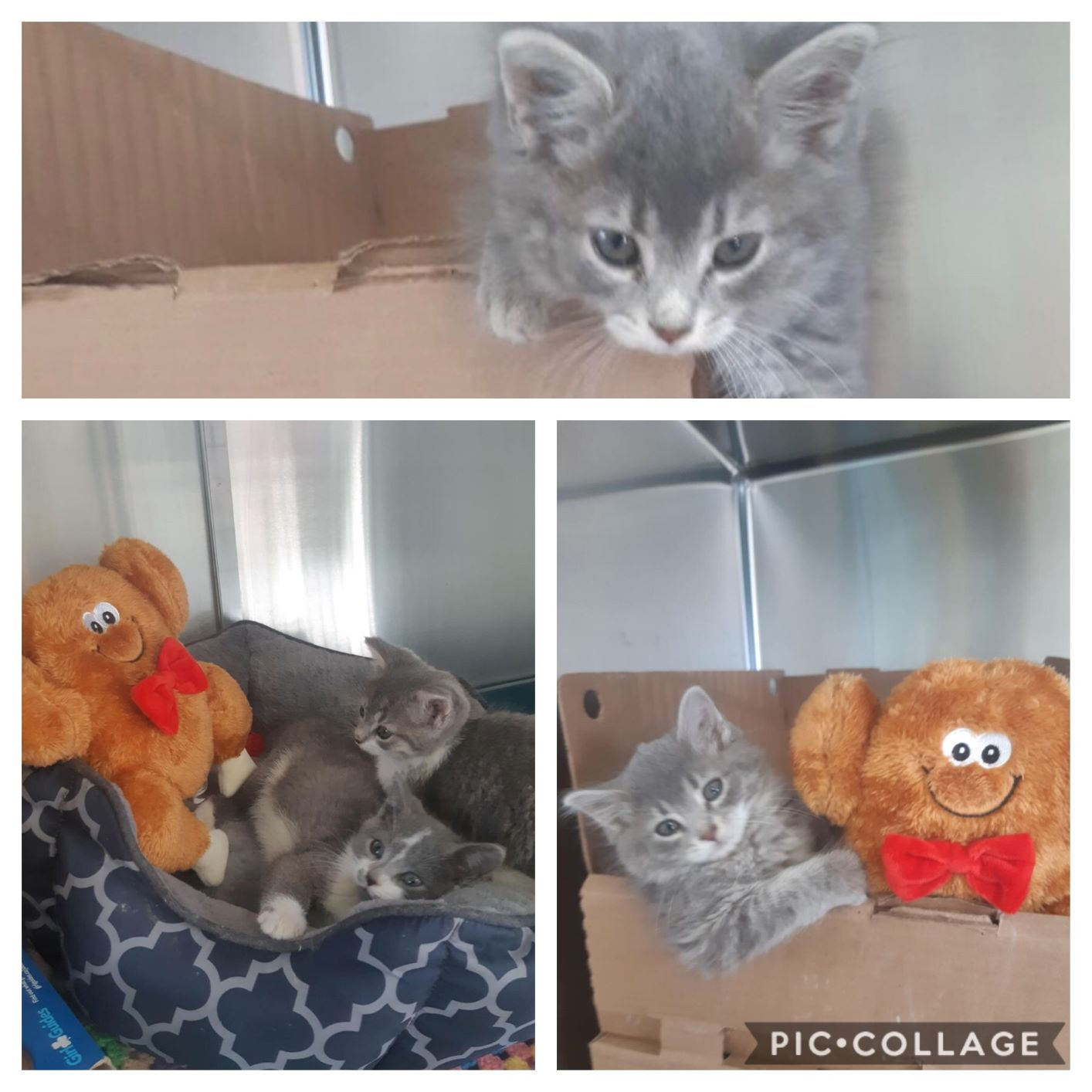 Sweet kittens ready to join your family